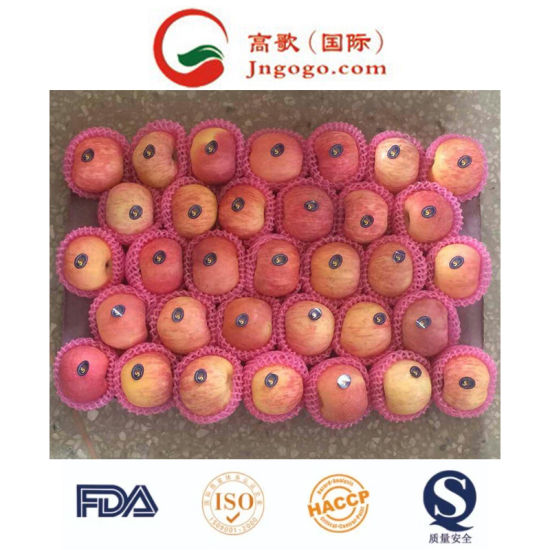 New Crop Fresh Chinese FUJI Apple