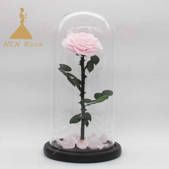 China Beauty And The Beast Pink Rose In Glass Dome On Wooden Base