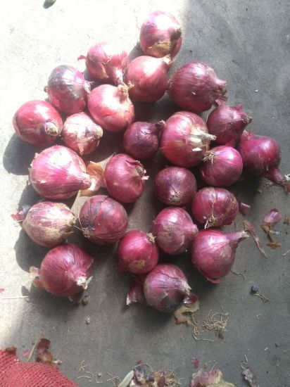 4-7cm Top Quality Fresh Red Onion Large Supplier pictures & photos