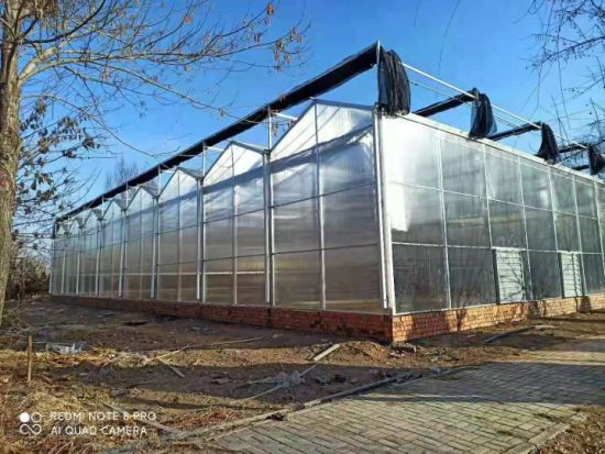Large Agriculture Green House with Vertical Farming and Hydroponic System