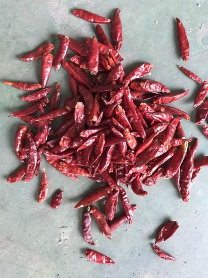 Discount Wholesales Hot Red Birds's Eye Chilli Pepper