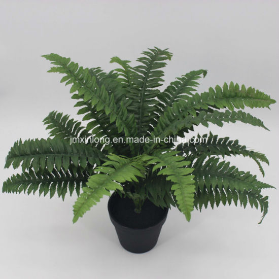 China Real Touch Boston Fern Bonsai China Artificial Plant And Artificial Boston Fern Price