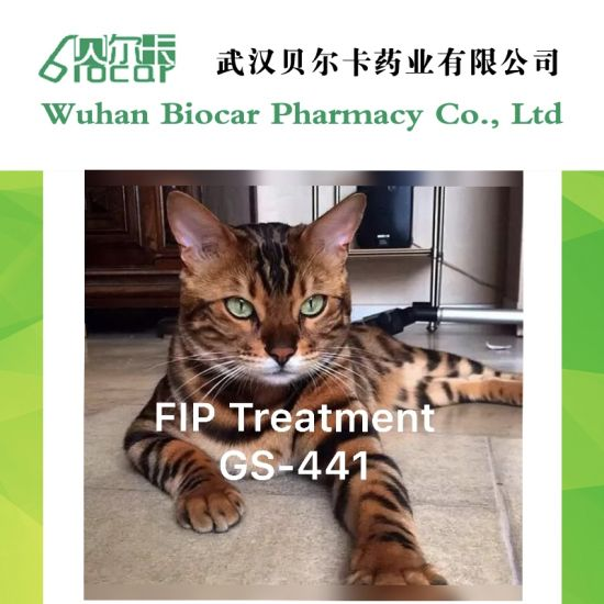 Chinese Manufacturer GS441524 Injectable CAS 1191237-69-0 for Cats with Fip