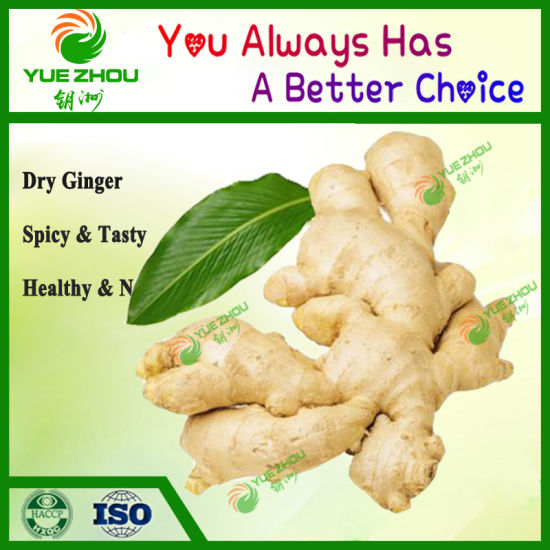 Wholesale Fresh Vegetable Air Dry Ginger From China