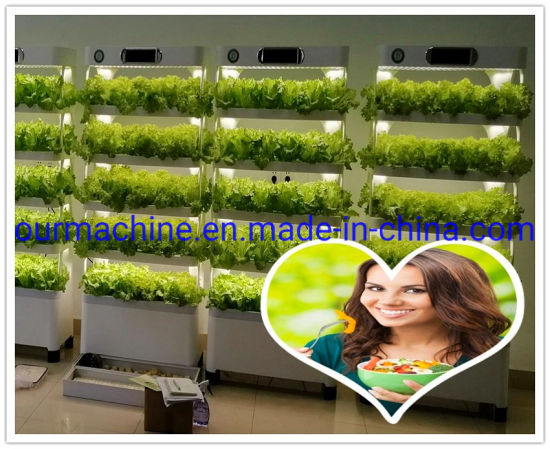 China Manufacturer Agricultural Equipment Plant Hydroponics Growing System Greenhouse