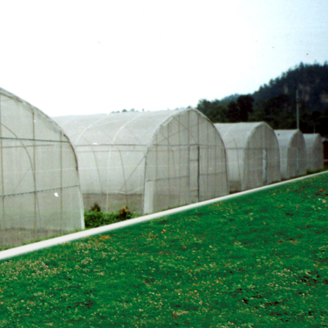 Hot! ! ! The Newest Agricultural Plastic Tunnel Film Greenhouse pictures & photos