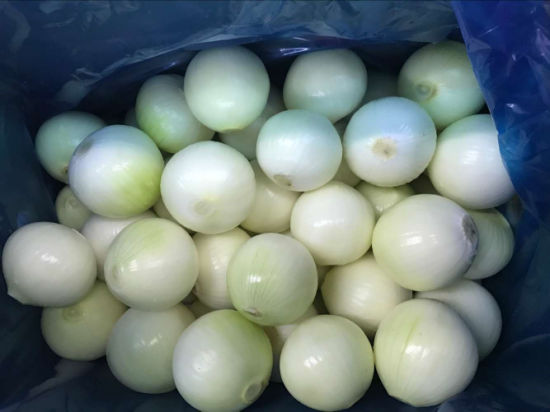 Top Quality Fresh Peeled Onion pictures & photos
