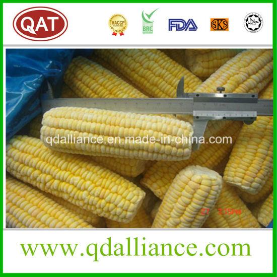 High Quality IQF Frozen Sweet COB Corn