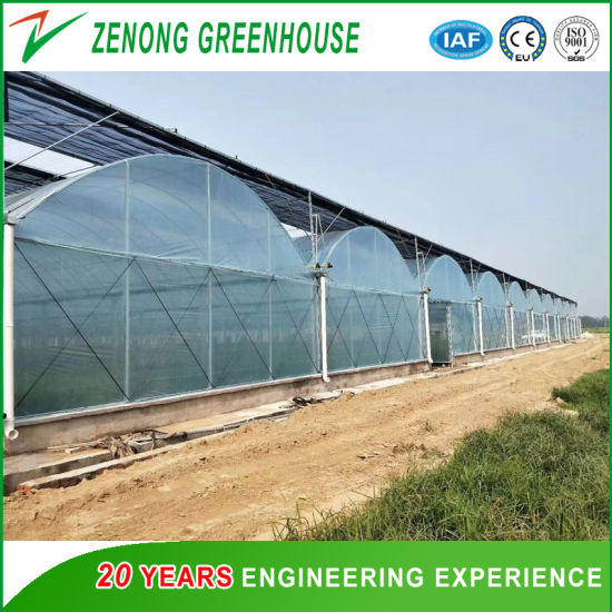 Galvanized Steel Frame Agriculture/Commercial Turn-Key Poly Tunnel Film Greenhouse Glass Greenhouse PC Greenhouse for Vegetables/Flowers/Exhibition/Hydroponics