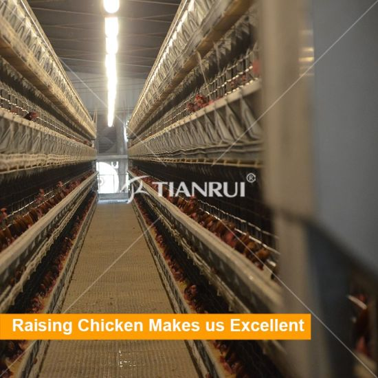 Poultry Farm Layer Chicken Battery Cage for Sale In Philippines Nigeria Kenya
