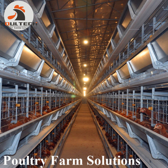 H Type of Automatic Layer /Egg Chicken Cage System pictures & photos