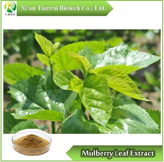 Mulberry Leaf Extract, Powder 10: 1