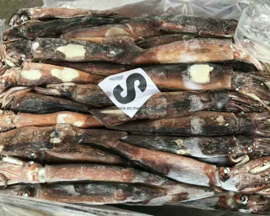 Frozen Argentine Ilex Squid 400-600g pictures & photos