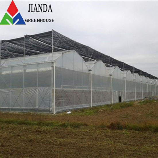 PE/Glass/Po/Film Covering Agriculture/Commercial/Farm Multi Span Tunnel/Arch/Dome Greenhouse for Anti Season Vegetable/Flower/Fruits with Hydroponic Tomato
