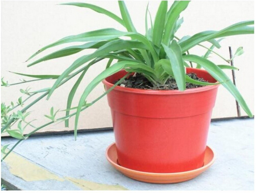 High Quality Bamboo Fiber Flower Pots Bc Fp1043 Pictures Photos