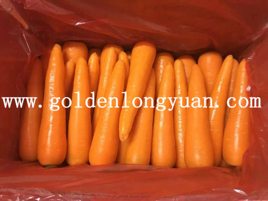 Chinese Fresh New Crop Carrot pictures & photos