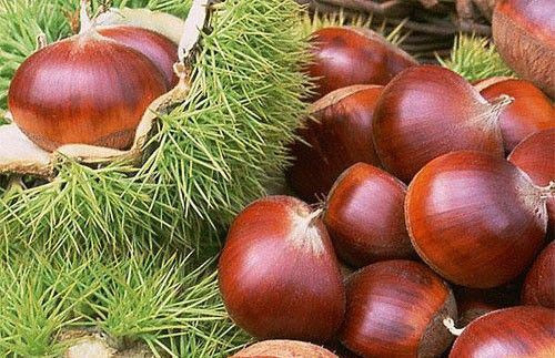 2019 New Season Chinese Fresh Chestnut From Tai'an