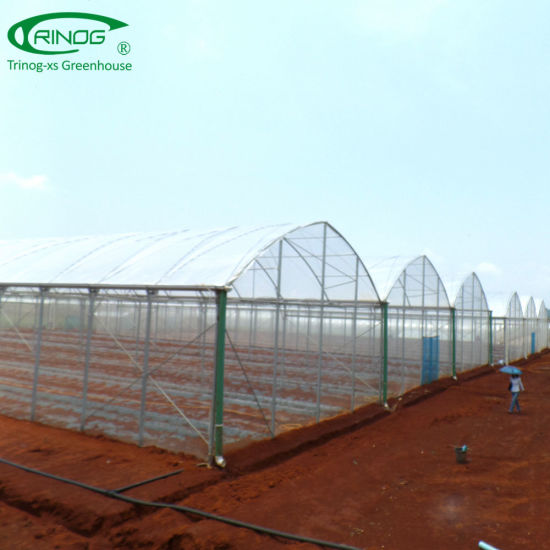 Multi-Span Film Agricultural Plastic Greenhouse for flower
