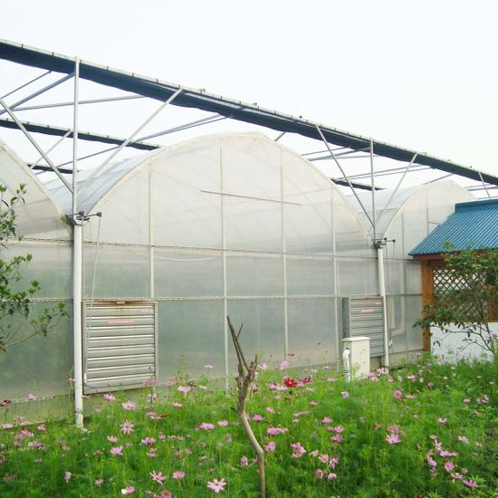 Garden Single Span Poly Film Covered Greenhouse for Peppers Strawberry