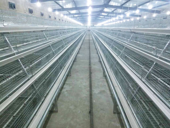 Hot Galvanized International Standard Poultry Equipment Small Chicken Cage pictures & photos