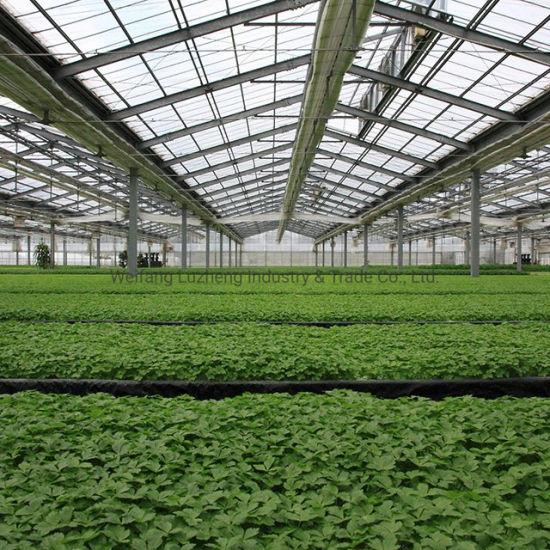 Tomato Soilless Hydroponics System Multi Span Plastic Film Greenhouse for Vegetable Farming Garden Blueberries Strawberry Cucumber Flower Pepper Planting