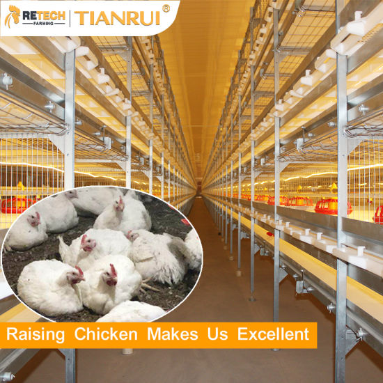 Automatic Broiler Chicken Farm Battery Cage Poultry Farming Equipment for sale