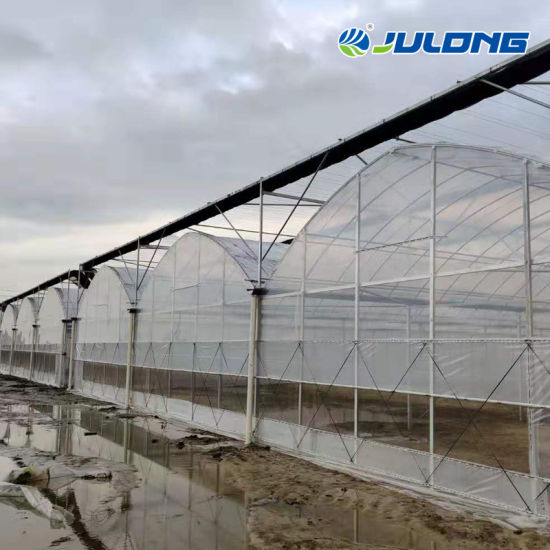 Intelligent Multi-Span Agricultural Plastic Film Greenhouses for Tomato/Cucumber/Strawberry/Lettuce Hydroponics