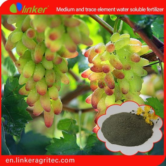 Linker Medium and Trace Element Water Soluble Fertilizer Application Carbon Enzyme Technology