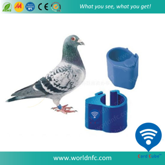 RFID Pigeon Ring Tags for Chicken pictures & photos