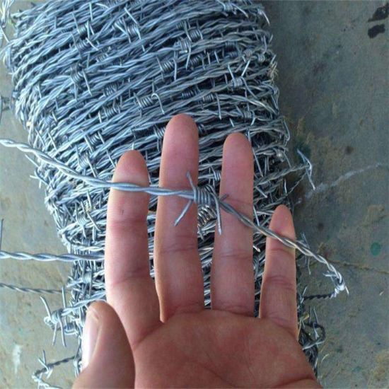 12# X 12#, 12# X 14# Galvanized Barbed Wire for Security Protected pictures & photos