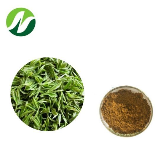 Factory Green Tea Camellia Sinensis 10%-98% Polyphenols 10%-95% EGCG Green Tea Extract