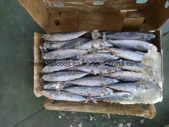China Bonito for Frozen Seafood Importers - China Seafood, Bonito