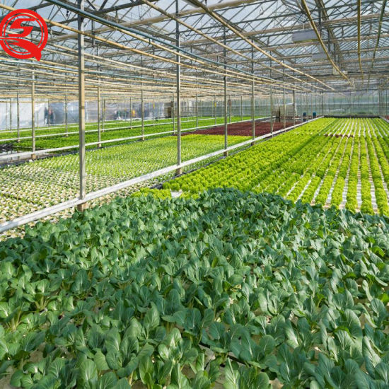 Agricultural Multi-Span Polycarbonate Sheet Greenhouse