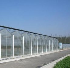 Multi-Span Steel Structure PC Sheet Greenhouse for Flower/Vegetable/Fruit with Cooling System