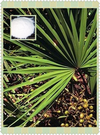 Men's Health Natural Fatty Acid 15%-85% Saw Palmetto Fruit Extract Fatty Acid 15%-85% for Medicine and Health Food