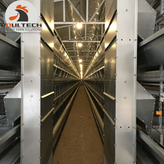 H Type Layer Chicken Raising Equipment/Fully Automatic Chicken Cage System