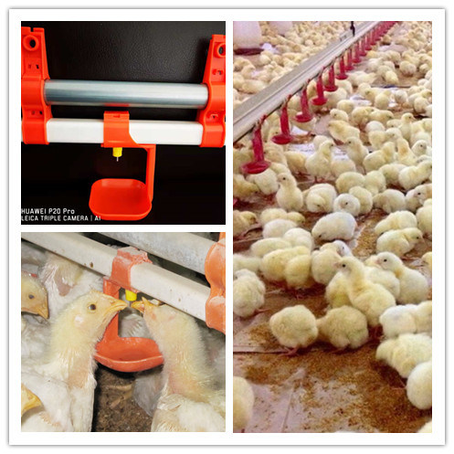 Modern High Quality Automatic Broiler Chicken Farm Poultry Equipment