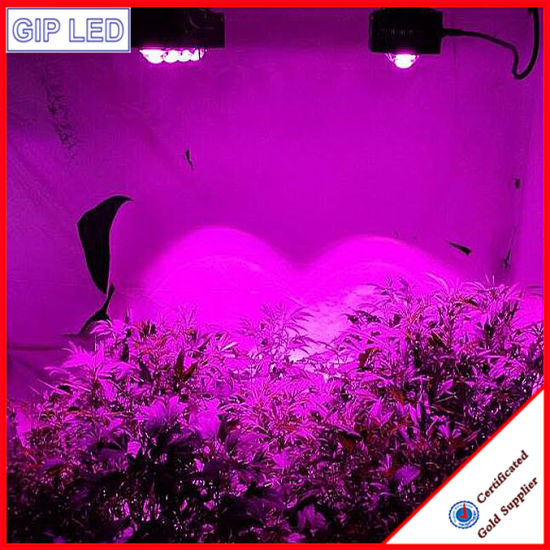 2016 New Greenhouse High Lumen 600W COB LED Grow Light pictures & photos