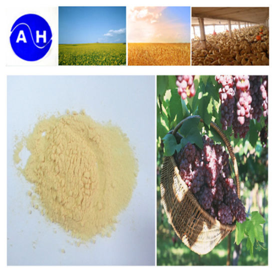 Fermentation Amino Acid 80% Organic Nitrogen 13% 13-0-0 pictures & photos