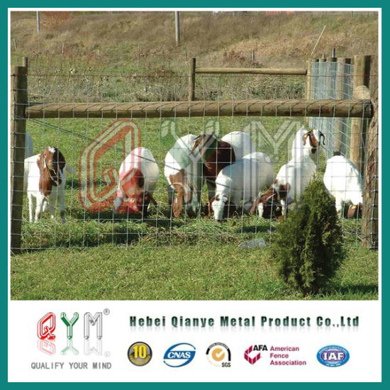 China Hot DIP Galvanized Woven Wire Deer Farm Fence/ Field Fence ...
