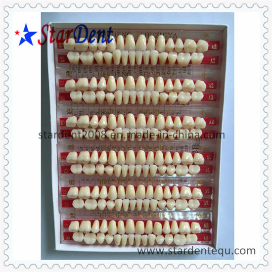 Multi-Layer Synthetic Resin Teeth of Dental Material pictures & photos