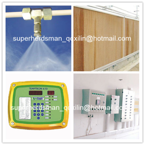 Full Set High Quality Automatic Poultry Feeding System for Broiler pictures & photos