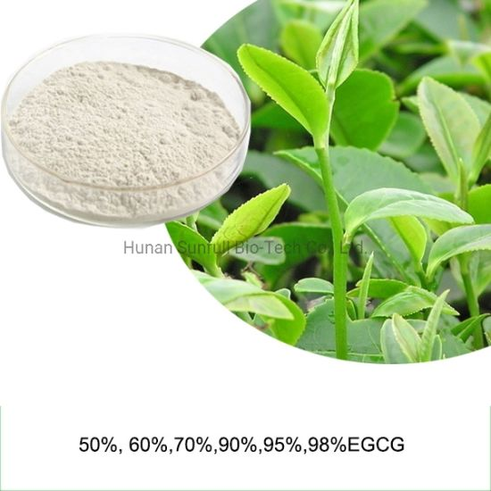 Green Tea Polyphenols EGCG Plant Extract pictures & photos