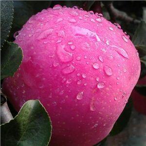 Fruit Apples Health Organic Fitness Vitamin Food