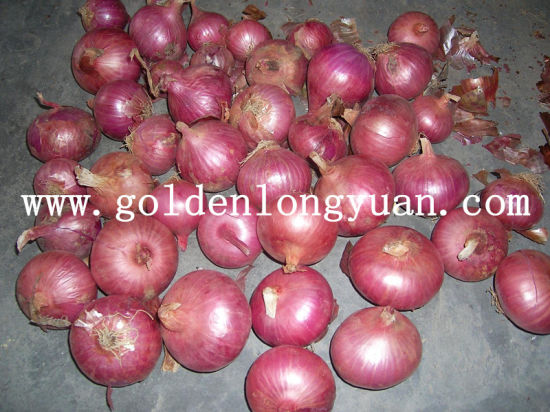 Shandong New Harvest Fresh Red Onion pictures & photos