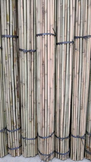 Straighten Natural Cheap Factory Bamboo Poles pictures & photos