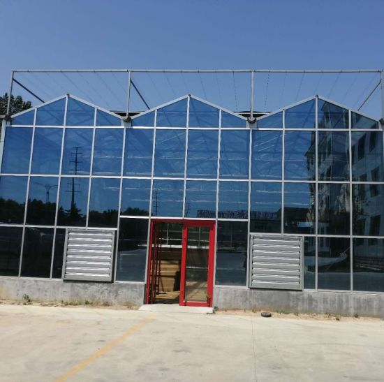 Multi-Span Venlo Glass Greenhouse with Cooling Pad and Cooling Fan