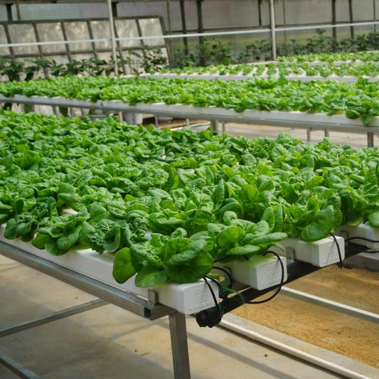 High Efficient Multi-Span Glass Greenhouse for Hydroponic Growing System