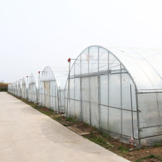 Multispan Steel Frame Tunnel Green House for Tomato Planting