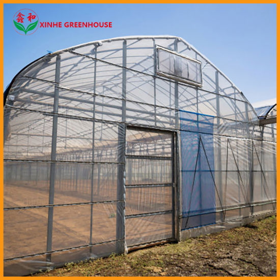 Hydroponic Growing Systems Film Greenhouse for Lettuce